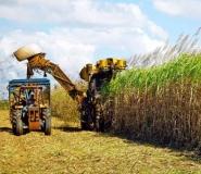 PRELEGERE PRIVIND SECTORUL PRODUSELOR AGRICOLE VEGETALE