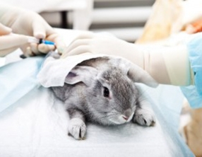 Sănătatea animalelor
